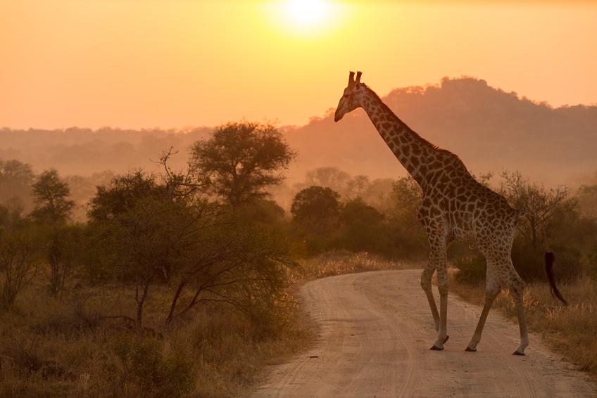 L'ÉMOTION SUD AFRICAINE
